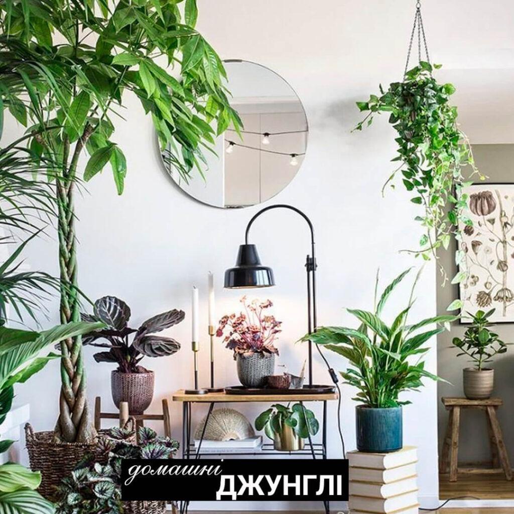 Неочевидна користь. Що є кімнатні рослини для нашої шкіри?